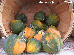 Basket Of Acorn Squash