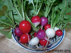 Bowl Of Colorful Radishes