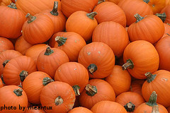 Bunch Of Sugar Pumpkins