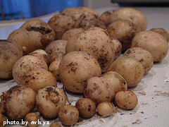 Harvested White Potatoes