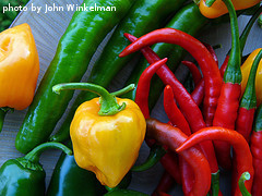 Multi-Colored Hot Peppers