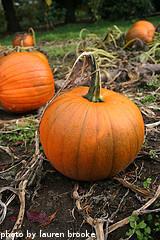 Curing Pumpkins