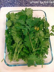 Harvested Cilantro Leaves